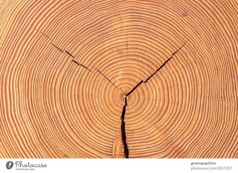 Lebensjahre - Holzscheibe Natur Baum alt Baumstamm Holzfußboden Baumringe Kreis braun Strukturen & Formen Hintergrundbild natürlich bauen Holzbauweise