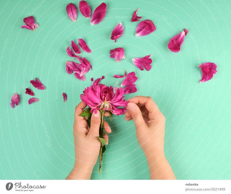 Frau Natur Sommer schön grün rot Hand Blume Erwachsene Blüte natürlich Feste & Feiern Mode rosa oben Körper