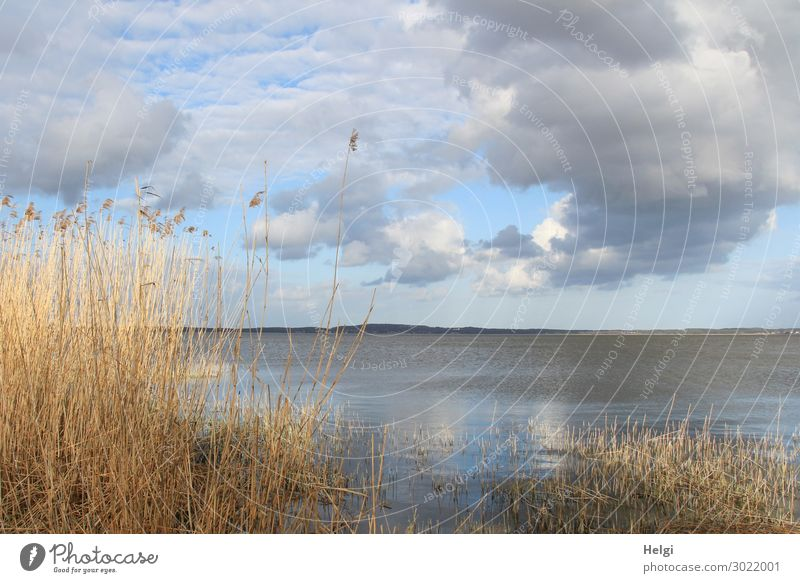 Regenwolken am Achterwasser Himmel Ferien & Urlaub & Reisen Natur Pflanze blau Wasser Landschaft Wolken Einsamkeit ruhig gelb Umwelt Frühling natürlich