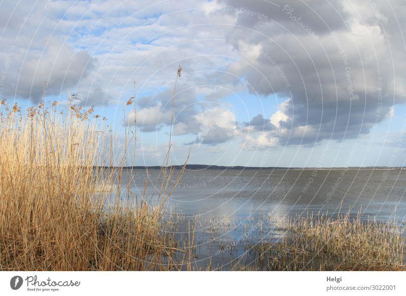 Sonnenschein und Regenwolken am Ufer des Achterwassers auf Usedom Ferien & Urlaub & Reisen Tourismus Umwelt Natur Landschaft Pflanze Wasser Himmel Wolken