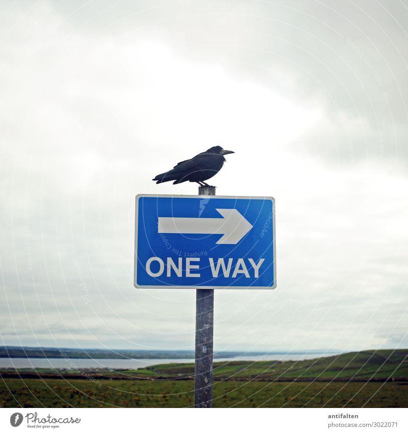 luftig | one way Ferien & Urlaub & Reisen Natur Landschaft Meer Tier ruhig Ferne Umwelt natürlich Küste Tourismus Freiheit Vogel Ausflug Feld ästhetisch