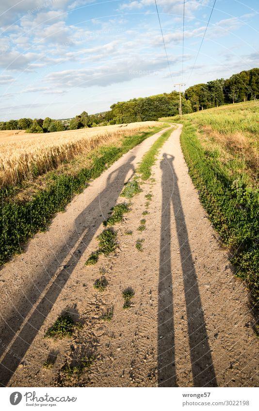 Lange Schatten eines Paares bei tiefstehender Sonne auf einem Feldweg zum Lindenbruch bei Schwaan Landschaft Natur Wolken Himmel Sommer Farbfoto Wiese Gras grün
