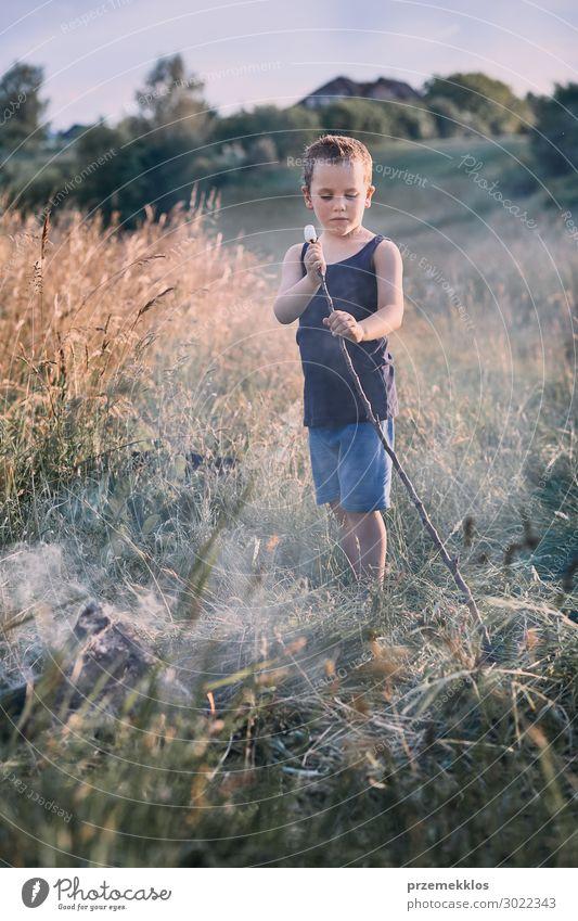 Kleiner Junge, der Marshmallow über einem Lagerfeuer brät. Lifestyle Freude Glück Freizeit & Hobby Ferien & Urlaub & Reisen Sommer Kind Mensch 1 3-8 Jahre