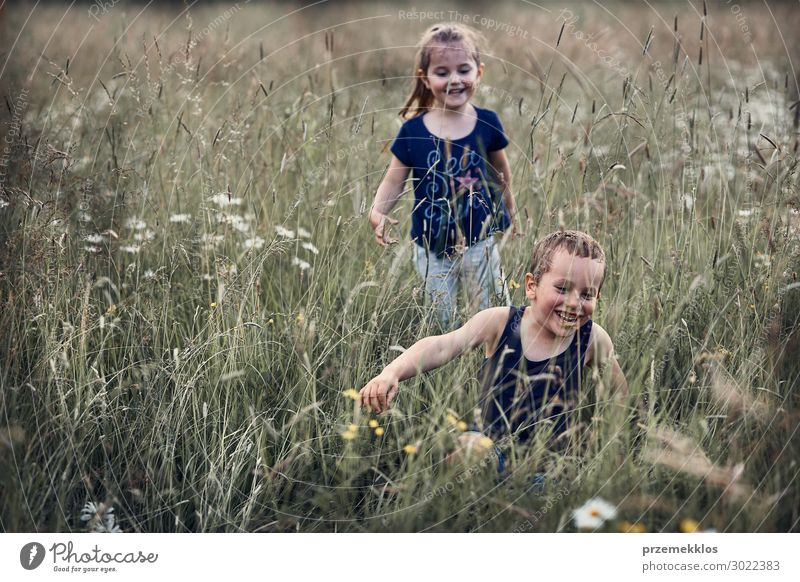 Kleine glückliche Kinder, die in einem hohen Gras spielen. Lifestyle Freude Glück Erholung Ferien & Urlaub & Reisen Sommer Sommerurlaub Mensch Mädchen Junge