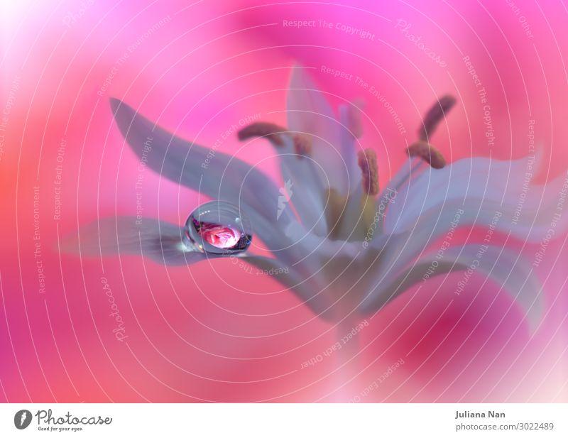 Schöne Natur Makrofotografie.Web Banner für Design.Art. Lifestyle elegant Stil Freude Kunst Kunstwerk Pflanze Wassertropfen Rose Tropfen Blühend Unendlichkeit