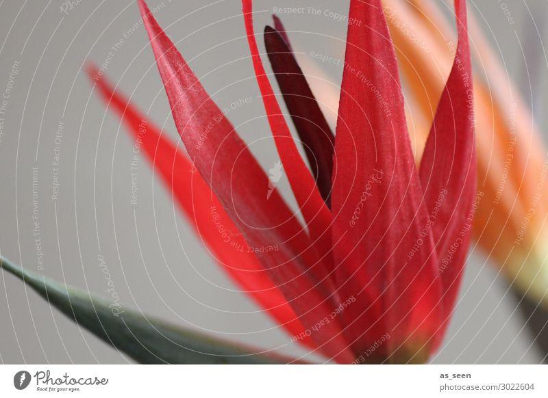 Strelitzie Lifestyle schön Leben harmonisch Häusliches Leben Wohnung Innenarchitektur Dekoration & Verzierung Natur Pflanze Blume Blatt Blüte exotisch Strelizie