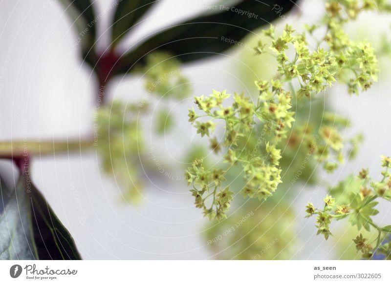 Shades of green harmonisch Häusliches Leben Innenarchitektur Dekoration & Verzierung Pflanze Blume Blatt Blüte Grünpflanze Frauenmantel Garten Blühend