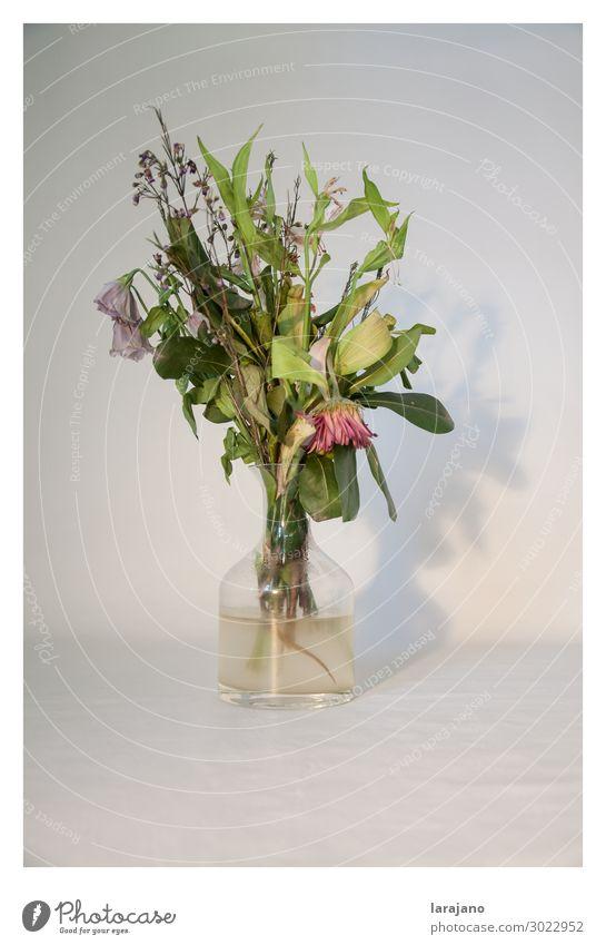 Tote Blumen Pflanze Blüte Container Dekoration & Verzierung Glas Wasser schön trashig feminin grün rosa Gelassenheit Traurigkeit Tod Dekadenz Zeit Blumentopf