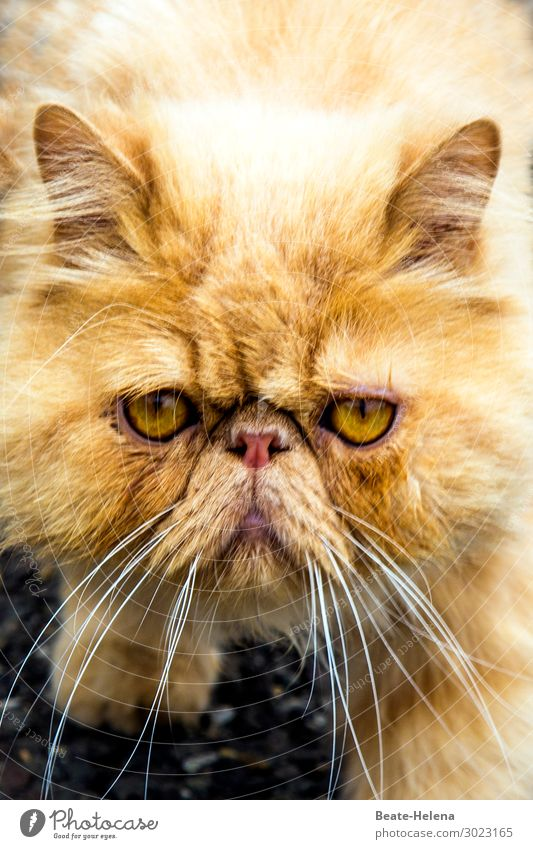 1100 | Gute-Laune-Feier elegant Stil schön Haustier Katze Tiergesicht beobachten Blühend Denken Erholung glänzend genießen Kommunizieren leuchten Blick warten