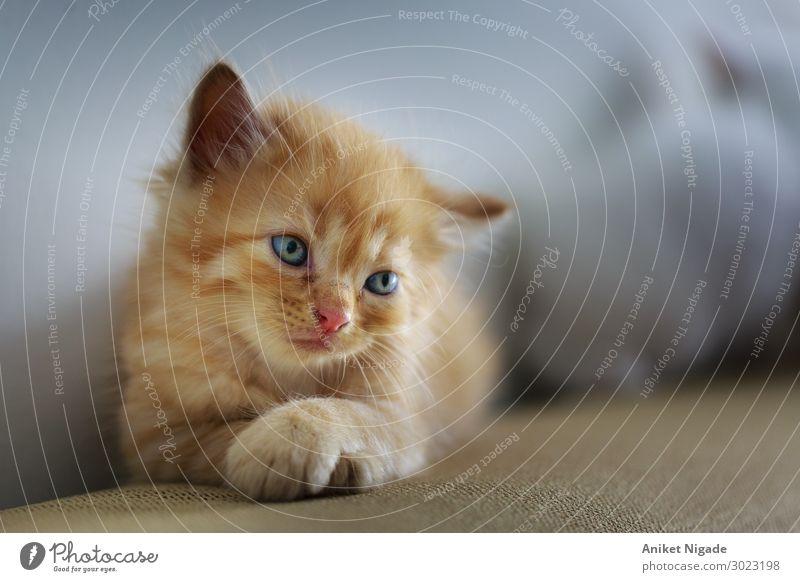 Katze Tier klein Kätzchen Katze Katze Haustier Nutztier Wildtier Totes Tier Hund Kuh Pferd Maus Taube Schwan Fliege Biene Spinne Qualle Schuppen Fell 1 2 Herde
