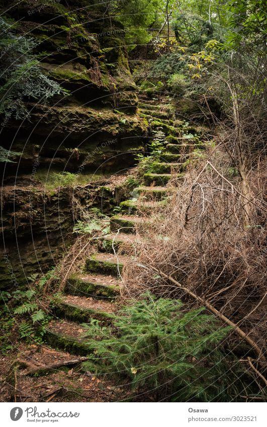 Treppe in der Sächsischen Schweiz Natur alt grün Landschaft Baum Einsamkeit Blatt Wald Berge u. Gebirge Stein Felsen wandern Sträucher verfallen Unbewohnt