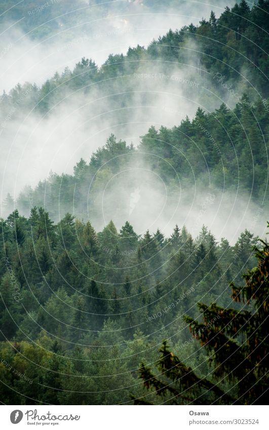Nebel in der Sächsischen Schweiz Natur Landschaft Baum Wald Berge u. Gebirge wandern Hügel Dunst Sachsen Elbsandsteingebirge Sächsische Schweiz Mittelgebirge