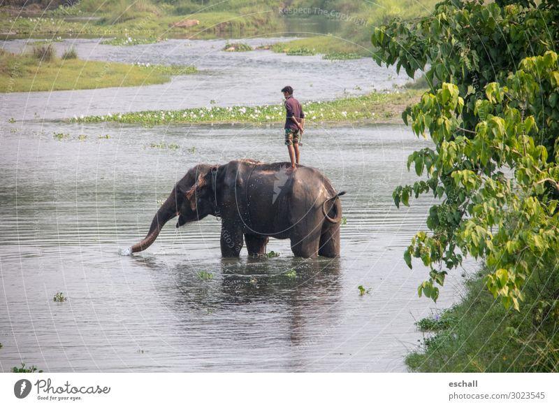Echte Freunde Abenteuer Ferne Safari maskulin 1 Mensch Natur Landschaft Wasser Flussufer Tier Nutztier Wildtier Elefant Schwimmen & Baden stehen authentisch