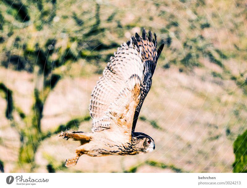 fühl dich frei! Natur schön Baum Tier Wald außergewöhnlich Freiheit Vogel fliegen Feld Wildtier Feder fantastisch Flügel Leichtigkeit Tiergesicht