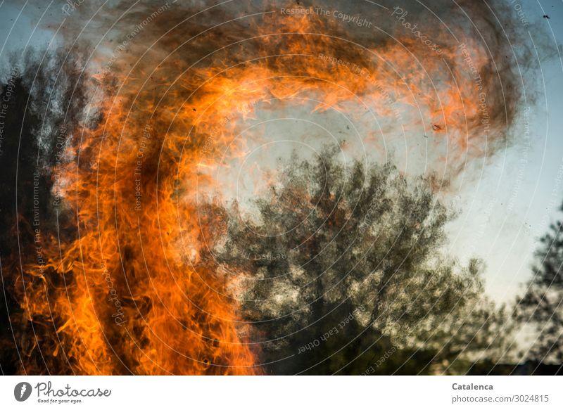 Es brennt Himmel Natur Pflanze blau Baum schwarz gelb Umwelt Traurigkeit orange Stimmung hell Angst glänzend Wachstum Kraft