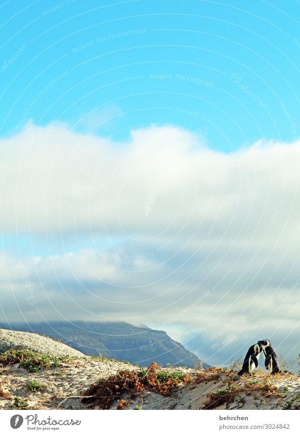 liebende Ferien & Urlaub & Reisen Tourismus Ausflug Abenteuer Ferne Freiheit Natur Landschaft Himmel Wolken Küste Strand Meer Wildtier Vogel Flügel Pinguin