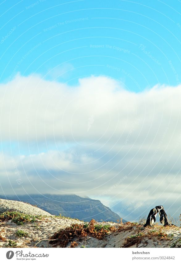 liebende Himmel Ferien & Urlaub & Reisen Natur Landschaft Meer Wolken Tier Ferne Strand Liebe Küste Tourismus außergewöhnlich Freiheit Vogel Zusammensein