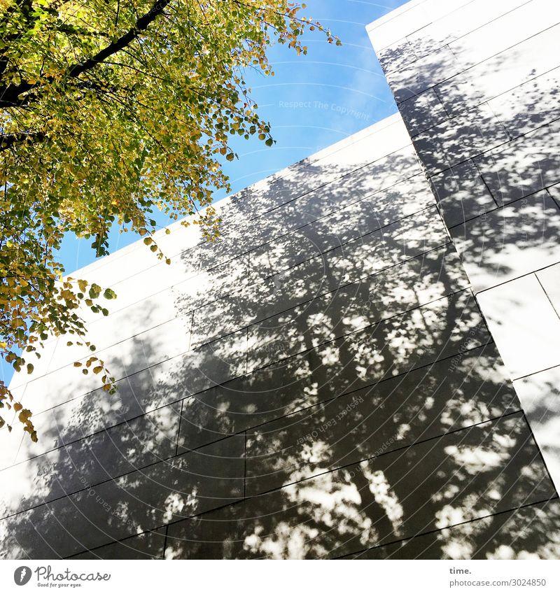 luftig | NaturStein Himmel Schönes Wetter Baum Blatt Ast Hamburg Hochhaus Mauer Wand dunkel eckig natürlich Kraft Zusammensein Gastfreundschaft Leben Bewegung