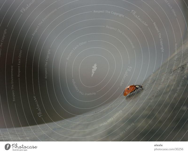 käfer auf wanderschaft I grau Verkehr Denkmal Marienkäfer Käfer