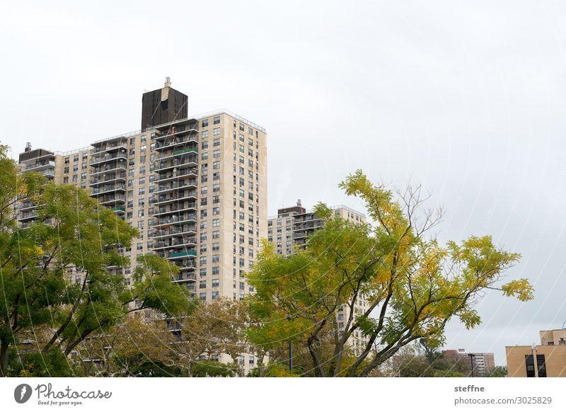 wohnen 2 Wolken Baum Haus Fassade Stadt New York City Coney Island Sozialstaat Farbfoto Außenaufnahme Menschenleer Textfreiraum rechts Textfreiraum oben