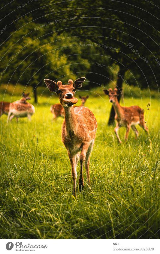 Hast du Brot? Natur grün Baum Erholung Tier Wärme Umwelt natürlich Glück Gras Zusammensein Zufriedenheit wild Wildtier Fröhlichkeit Tiergruppe