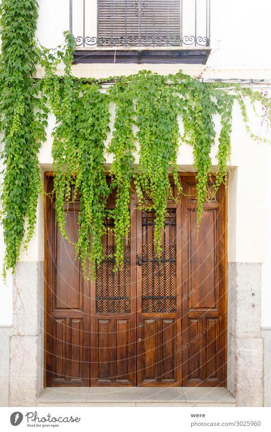 Overgrown door Pflanze Grünpflanze Bauwerk Gebäude Tür alt ästhetisch natürlich Andalusia Cordoba Historic facades Holiday Spain building historic house nobody