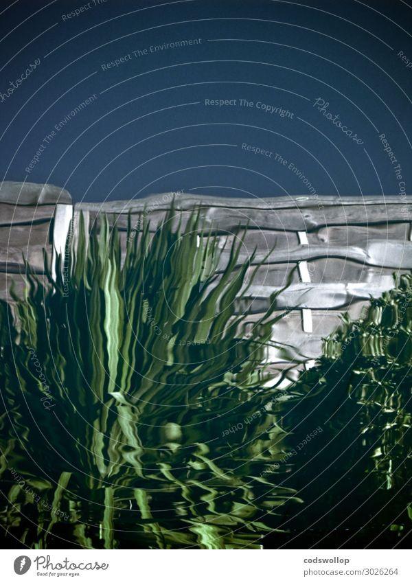 in the upside down Wasser Pflanze Grünpflanze Zaun Farbfoto Gedeckte Farben Außenaufnahme Textfreiraum oben Reflexion & Spiegelung