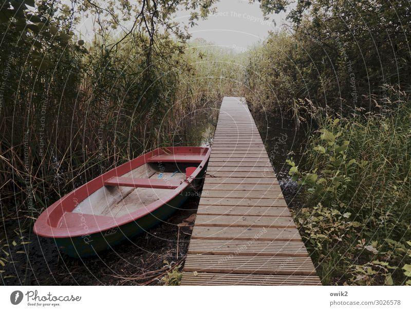 Entschleunigt Natur Pflanze Erholung ruhig Holz Umwelt Gras See Sträucher Schönes Wetter warten einfach Gelassenheit Meditation Steg Vorsicht
