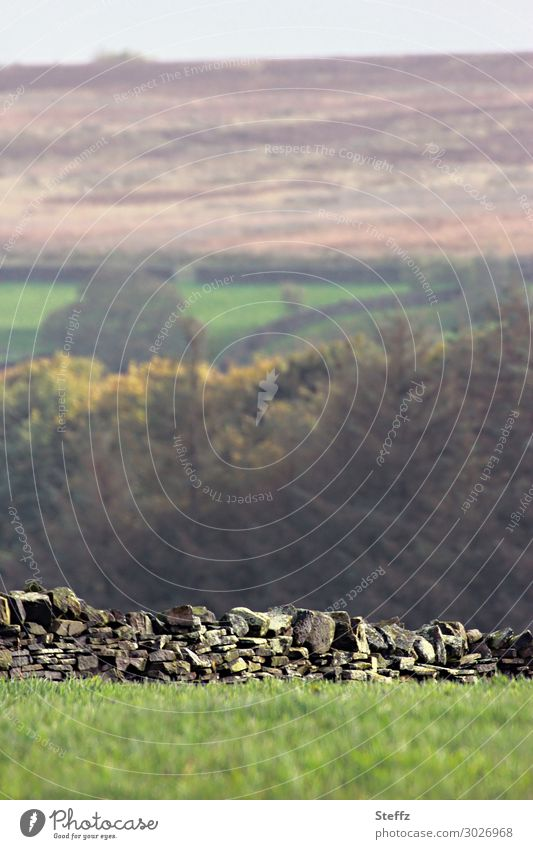 drystone wall Umwelt Natur Landschaft Herbst Baum Gras Wiese Feld Hügel England Nordeuropa Menschenleer Stein alt natürlich grün ruhig Provinz Zaun Steinmauer