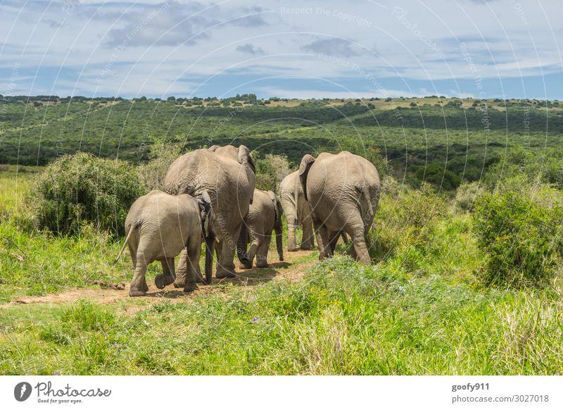 Familienausflug Ferien & Urlaub & Reisen Tourismus Ausflug Abenteuer Ferne Freiheit Safari Expedition Umwelt Natur Landschaft Pflanze Tier Erde Sand Himmel