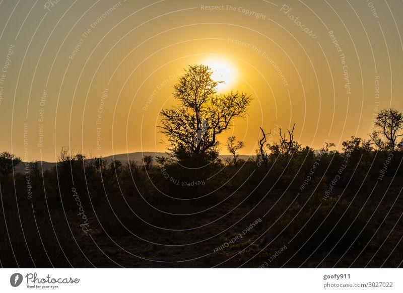 Sonnenuntergang in der Namib Ferien & Urlaub & Reisen Tourismus Ausflug Abenteuer Ferne Freiheit Safari Expedition Umwelt Natur Landschaft Pflanze Tier Erde