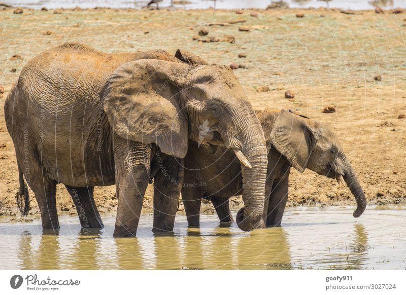 Gemeinsame Erfrischung Ferien & Urlaub & Reisen Tourismus Ausflug Abenteuer Ferne Freiheit Safari Expedition Umwelt Natur Landschaft Erde Sand Wasser Wüste