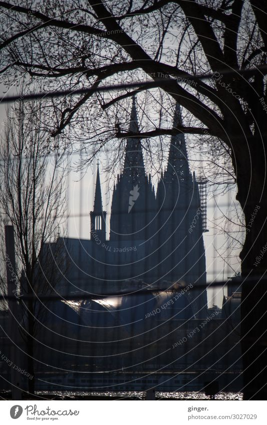 Darkside of Cologne - Domblick alt Stadt Baum Ferne dunkel schwarz Architektur kalt außergewöhnlich grau Linie Kirche hoch Ast Sehenswürdigkeit Skyline