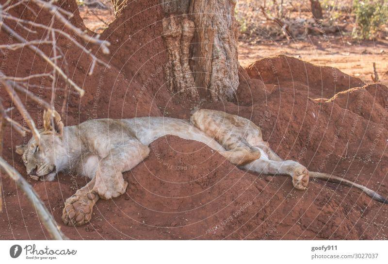 Einfach mal entspannen Ferien & Urlaub & Reisen Tourismus Ausflug Abenteuer Ferne Freiheit Safari Expedition Umwelt Natur Urelemente Erde Sand Wärme Dürre Baum