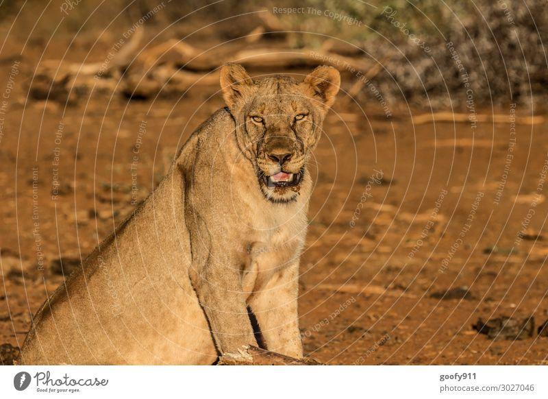 Alles im Blick Ferien & Urlaub & Reisen Tourismus Ausflug Abenteuer Ferne Freiheit Safari Expedition Umwelt Natur Erde Sand Sonnenlicht Wärme Dürre Tier