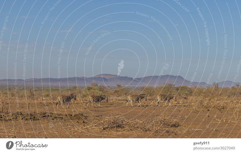 Wandertag Ferien & Urlaub & Reisen Tourismus Ausflug Abenteuer Ferne Freiheit Safari Expedition Natur Landschaft Erde Sand Himmel Horizont Schönes Wetter Wärme