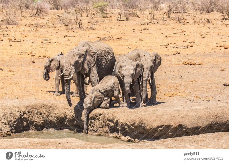 Durstig Ferien & Urlaub & Reisen Natur Wasser Landschaft Tier Ferne Wärme Umwelt Tourismus Freiheit Sand Ausflug Erde Wildtier Tiergruppe Abenteuer