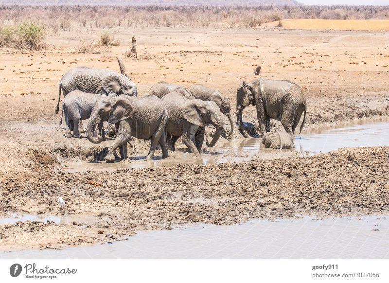 Abkühlung Ferien & Urlaub & Reisen Tourismus Ausflug Abenteuer Ferne Freiheit Safari Expedition Umwelt Natur Landschaft Erde Sand Wasser Wärme Dürre Wüste Tier