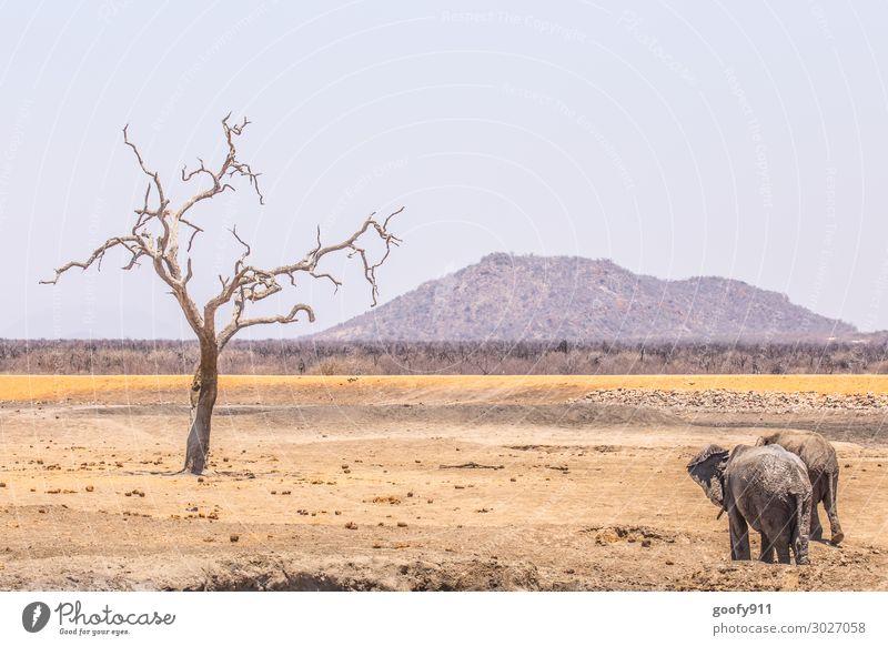 Auf in eine neue Woche Himmel Ferien & Urlaub & Reisen Natur Landschaft Baum Tier Ferne Wärme Umwelt Tourismus Freiheit Sand Ausflug Tierpaar träumen Erde