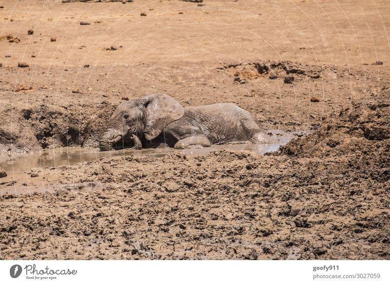 Junger Elefant beim Schlammbad Ferien & Urlaub & Reisen Natur Wasser Erholung Tier Freude Ferne Tierjunges Wärme Umwelt Glück Tourismus Spielen Freiheit