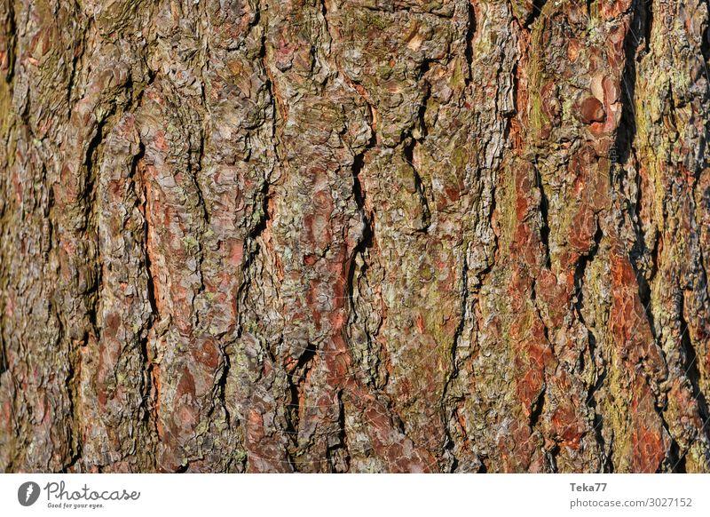 Baumrinde #3 Umwelt Natur Landschaft Pflanze ästhetisch Farbfoto Gedeckte Farben Nahaufnahme