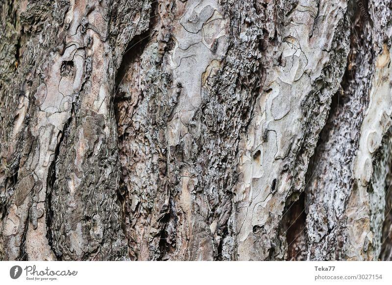 Baumrinde #1 Umwelt Natur Landschaft Pflanze ästhetisch Strukturen & Formen Farbfoto Außenaufnahme Nahaufnahme