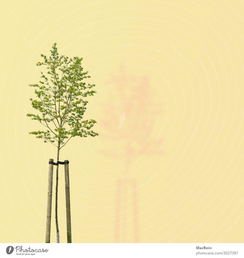 Baum auf gelben Hintergrund Umwelt Natur Pflanze Frühling grün Umweltschutz Vergänglichkeit dee illustration Laubbaum Textfreiraum ökologisch Blatt Baumstamm