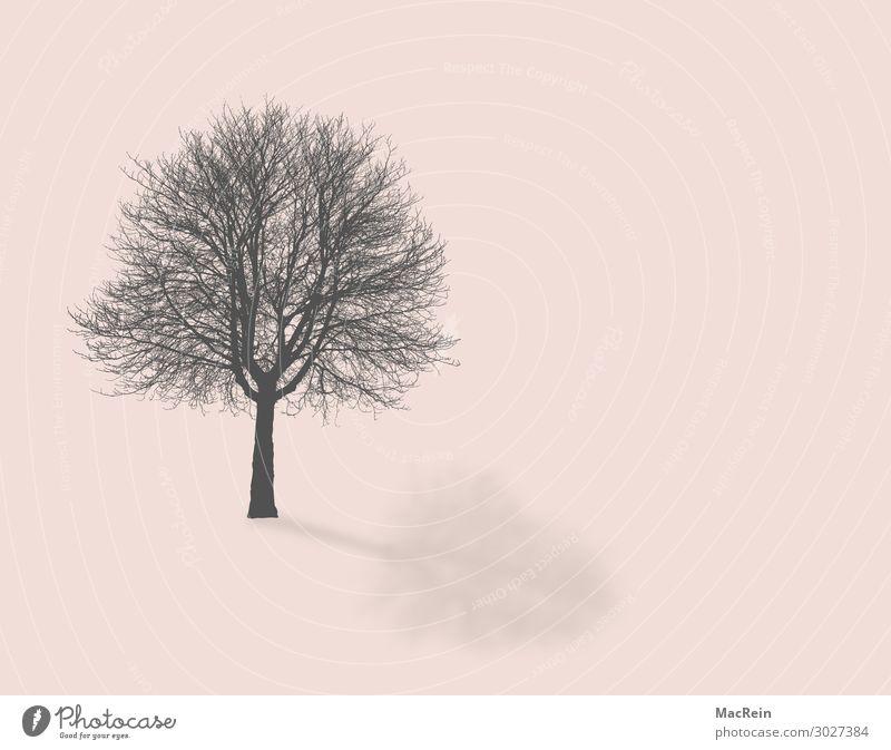 Baum ohne Blätter Umwelt Natur Landschaft Pflanze Herbst Ast Zweige u. Äste Baumstamm Menschenleer rosa kahl Farbfoto Textfreiraum rechts
