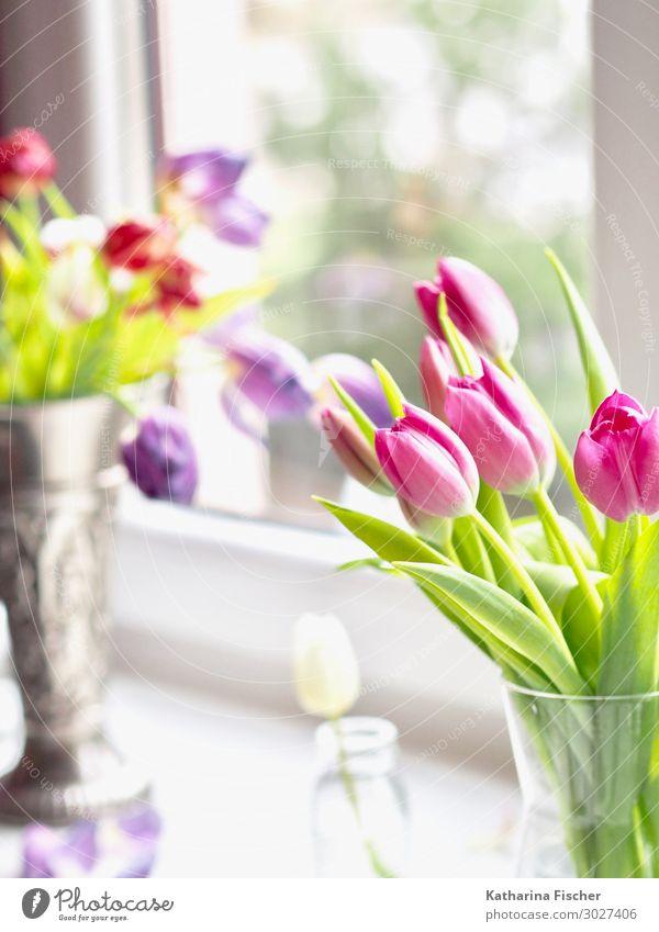 Tulpen Natur Pflanze Frühling Sommer Herbst Winter Blatt Blüte Blühend schön mehrfarbig gelb grün violett orange rosa rot silber türkis weiß Vase Fenster