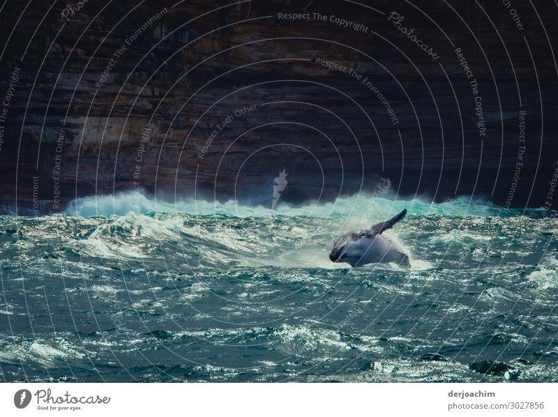 luftig / manchmal brauche ich das // Bei der Walbeobachtung im Meer, springt ein Wal seitlich aus dem Wasser. Im Hintergrund sind Felsen zu erkennen. Sommer