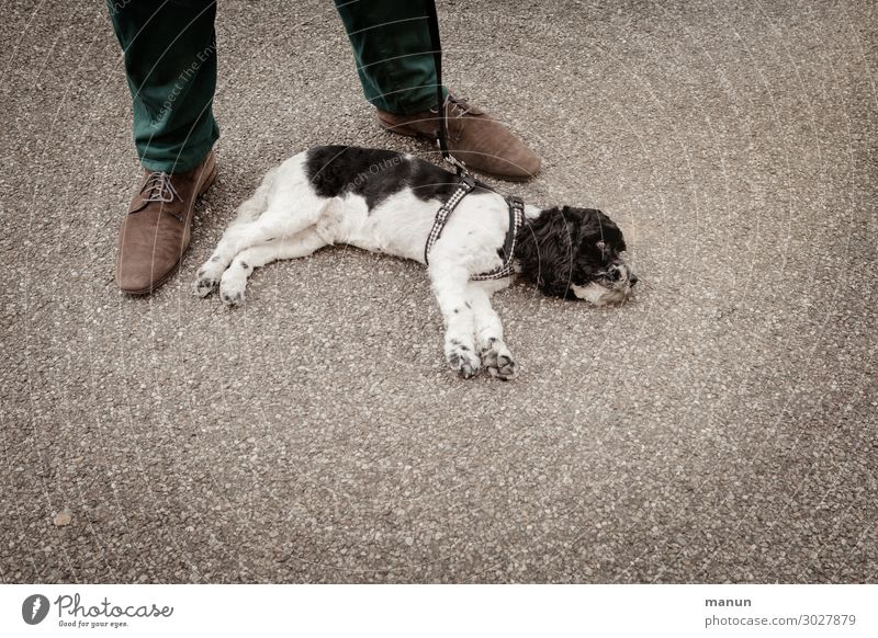 Hundstage Lifestyle Gesundheit Familie & Verwandtschaft Freundschaft Leben Fuß 1 Mensch Sommer Wärme Haustier Tierjunges Erholung liegen niedlich Zufriedenheit