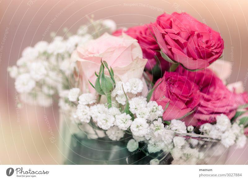 Blumengruß Lifestyle Häusliches Leben Dekoration & Verzierung Feste & Feiern Muttertag Hochzeit Geburtstag Taufe Blumenstrauß Rosenblüte Freundlichkeit frisch