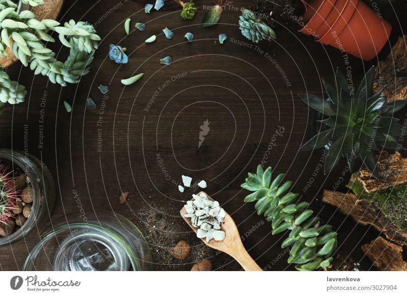 Blumen und Sukkulenten auf Holztisch Blüte Botanik Kaktus Textfreiraum geschnitten dunkel Escheveria Fertilisation geblümt frisch Garten Blatt Pflanze Topf