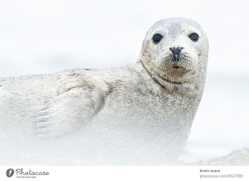 Natur weiß Landschaft Meer Tier ruhig Strand Umwelt Küste Deutschland Freiheit Erde grau Sand frei Wildtier